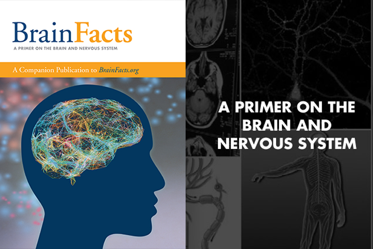 """Cover of the BrainFacts book """"A primer of the brain and nervous system"""""""
