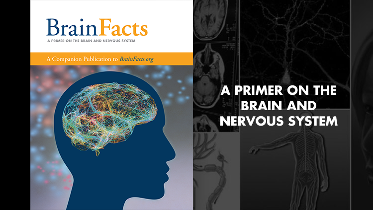 Brainfacts Book