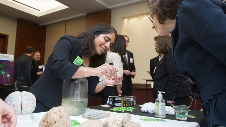 Person examining a brain at the 2018 SfN Brain Fair